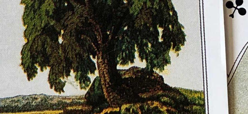 карта Дерево Ленорман
