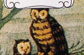 карта совы